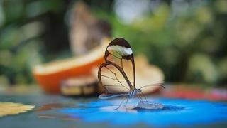 butterfly-734823