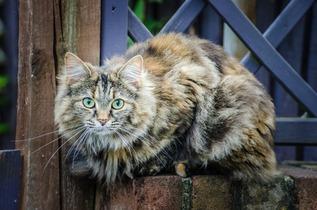 cat-219693