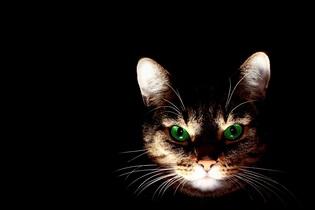 cat-606532