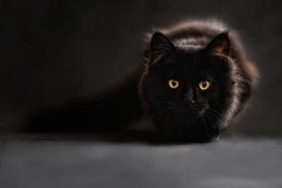 cat-694730