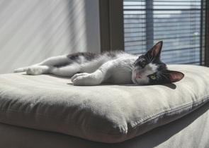 cat-736455