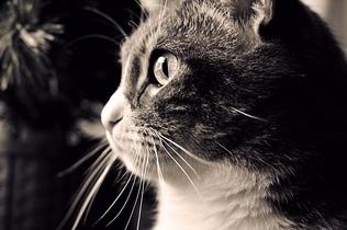 cat-743432