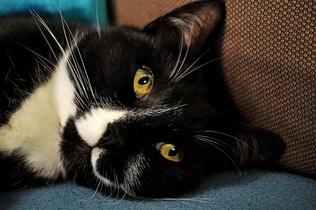 cat-743455