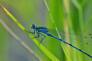 dragonfly-540839