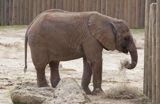 elephant-743876