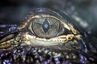 eye-638740