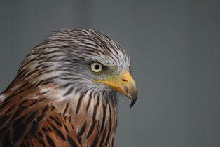 falcon-742166