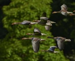 flock-of-birds-350290