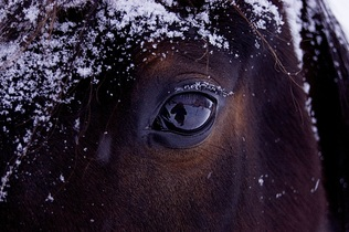 horse-743474