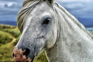 horse-head-58375