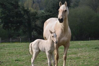 horses-743905