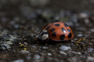 ladybug-196328