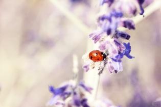 ladybug-676448