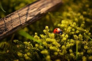 ladybug-690606