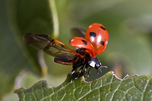 ladybug-743562