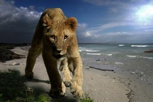 lion-726290