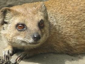 meerkat-743559