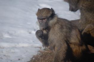 monkey-744264
