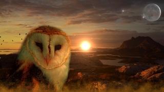 owl-711601