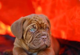 puppy-742618