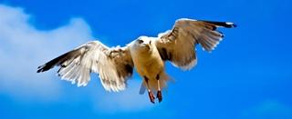seagull-733898