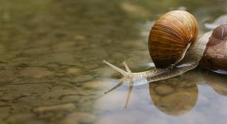 snail-187559