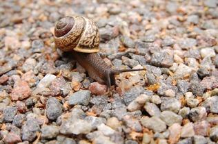 snail-221988