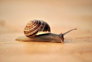 snail-231064