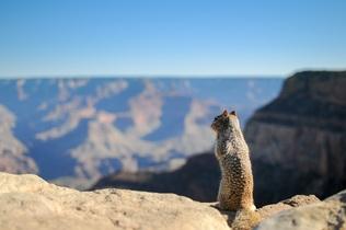 squirrel-731889