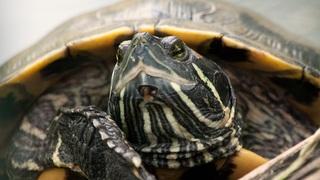 turtle-641462
