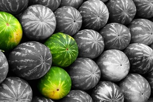 melons-605066
