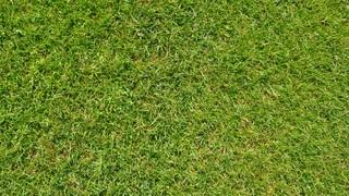 grass-1176417