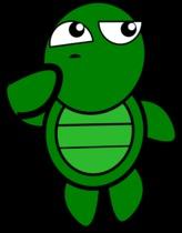 turtle-152082