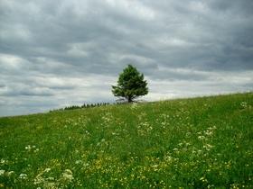 landscape-350388