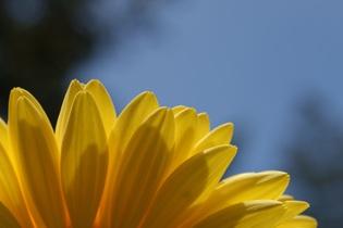 daisy-365787