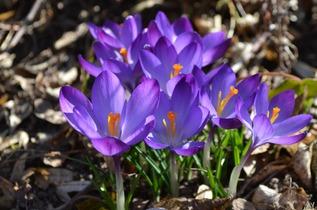 flowers-284573