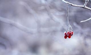 frozen-201495