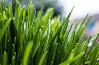 grass-740397