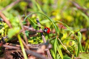 lady-bug-723790