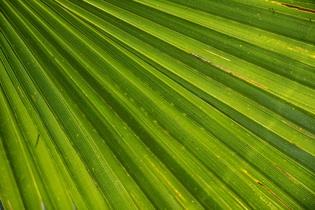 palm-366843