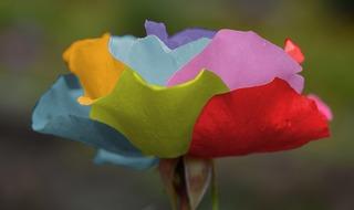 roses-212539